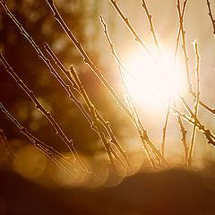 """фотоальбом """"Морозным утром"""""""