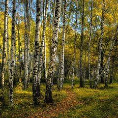 """фото """"Тихо бродит осень"""""""