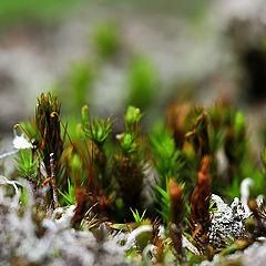 "фото ""Micro Cosmos 3"""