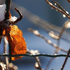 """фото """"Осенний лист"""""""