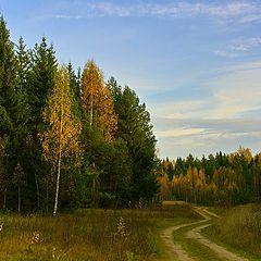 """фото """"по лесной дороге"""""""