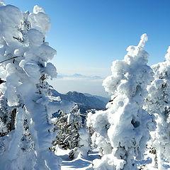 "фото ""Snow monsters."""