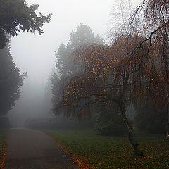 """фото """"Осенний полонез # 5"""""""