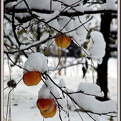 """фото """"Зима обещает быть..."""""""