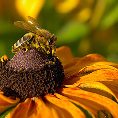 "фото ""Тортик для пчелы"""