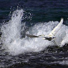 "photo ""Winged surfer"""