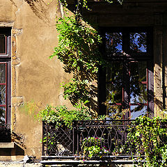 "photo ""the old windows"""