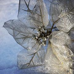 """фото """"Нежные цветы зимы"""""""