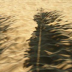 """фото """"Колышится ветром пальмы листок..."""""""