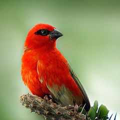 """photo """"Red"""""""