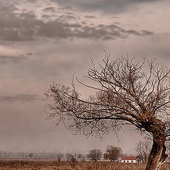 "photo ""The Lonely Tree"""