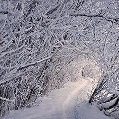 """фото """"Приглашение в зиму"""""""