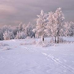 """фото """"И лес заснеженно-далёкий зовёт прoтopить в нём лыжню"""""""