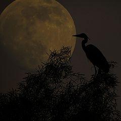 "фото ""Ночная птица"""