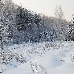 """фото """"Зимний  лес"""""""