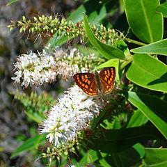 """фото """"Butterfly"""""""