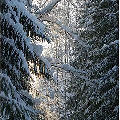 "фото ""Гуляя по лыжне. -28* на солнце"""