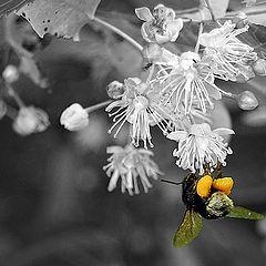 "фото ""Bumblebee"""