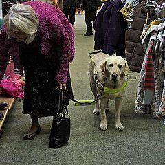 "photo ""The dog work."""