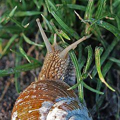 """фото """"Snail"""""""