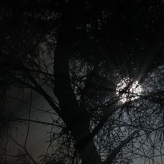 "фото ""moonlight"""