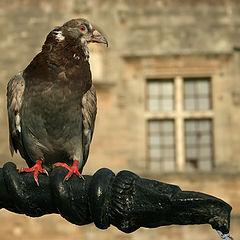 "photo ""I`m not a dove, I`m an eagle!"""