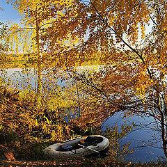 """фото """"Осенние   листья"""""""
