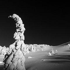 "photo ""Snow Ghosts"""