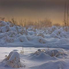 """photo """"Snowy silence."""""""