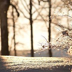 """фото """"Свет и тень. Январь."""""""