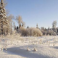 "фото ""Пушистый   снег"""