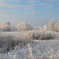 """фото """"Зима в России. Иней."""""""