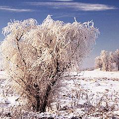 """фото """"Маленький ледяной апокалипсис."""""""