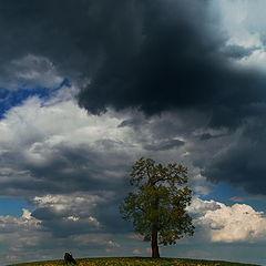 """фото """"весенний пейзаж с одуванчиками, коровой и отдельно стоящим деревом"""""""