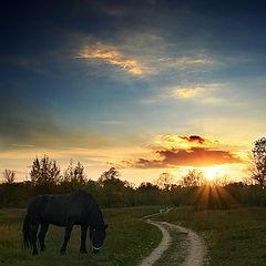 "фото ""про маленькую лошадку на фоне закатного солнца"""