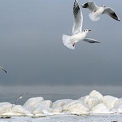 """фото """"Wintertime..."""""""