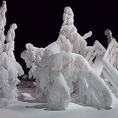 """фото """"Winter's zoo"""""""