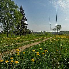 """photo """"Yellow flowers f. Svetlana-M"""""""