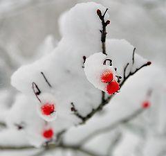 """album """"Winter colors"""""""