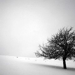 "photo ""Alone"""