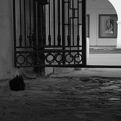 """фото """"Ожидание чёрного кота.."""""""