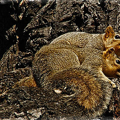 """фото """"Mr and Mrs Squirrel"""""""