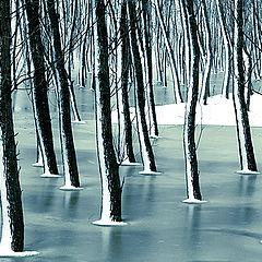 "фото ""Frozen forest / Замороженный лес"""