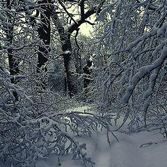 "фото ""Тишина серебряного леса"""