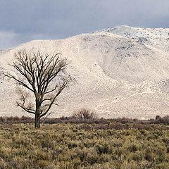 """photo """"Выскогорная пустыня в Неваде"""""""
