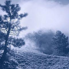 """фото """"Сон, окутанный туманом..."""""""