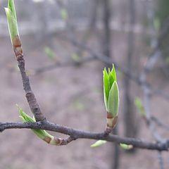 """фото """"Пришла весна"""""""