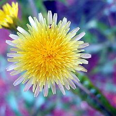 "фото ""Spring flower 2"""
