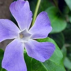 "фото ""Spring Flower 4"""