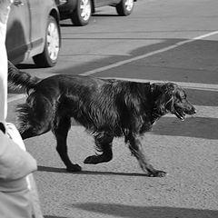 """фото """"Dog"""""""